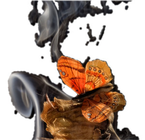 metulj 6_izrezana fotka